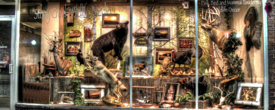 Stony Creek Wildlife Studio - Home